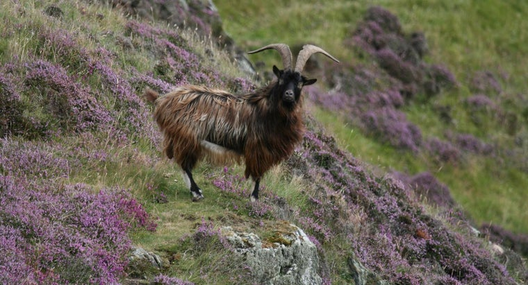 sound-goat-make