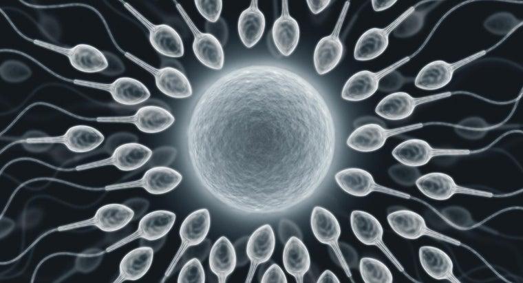 sperm-made