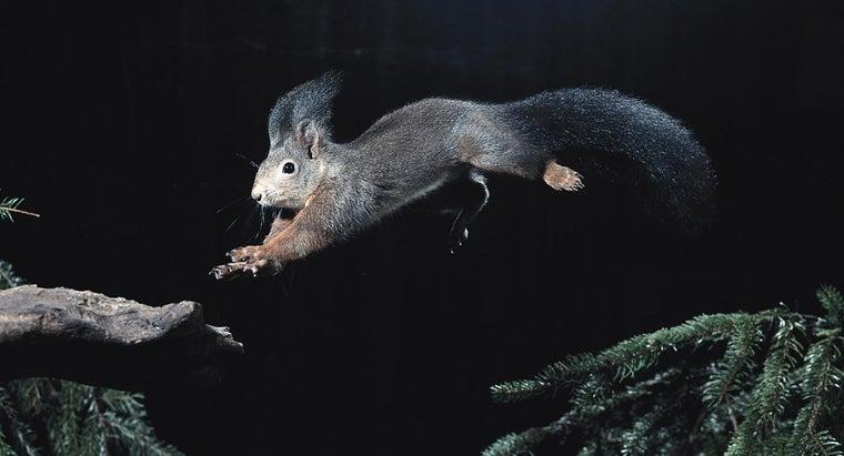 squirrels-night