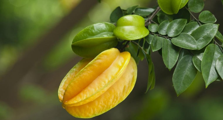 star-fruit-grow
