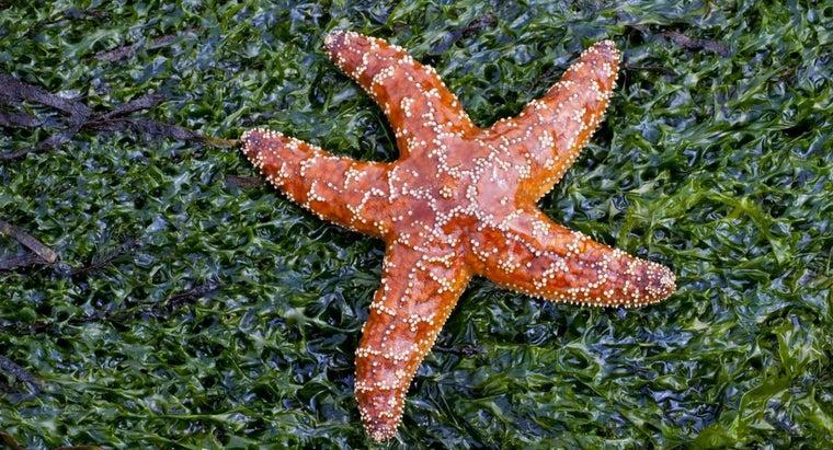 starfish-move