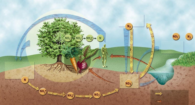 steps-nitrogen-cycle