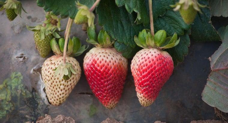 strawberry-plants-reproduce