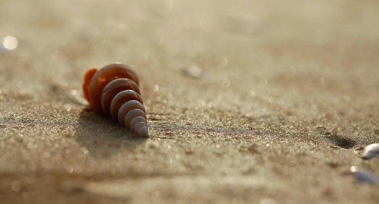 symbolism-seashells