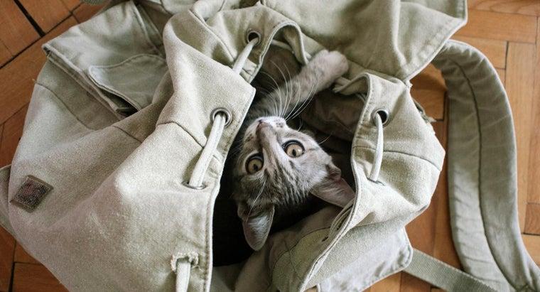life-expectancy-tabby-cat
