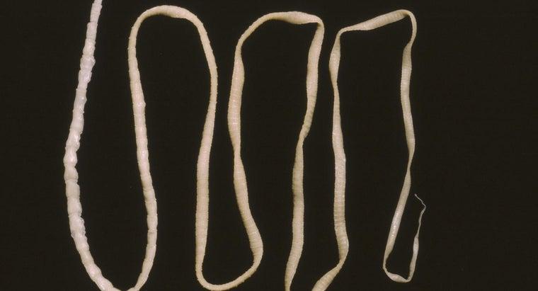 tapeworm-look-like