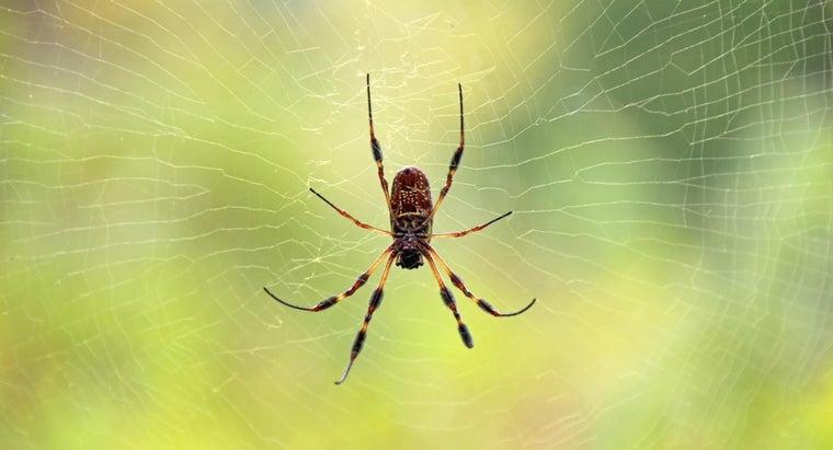 telltale-signs-skin-spider-bites