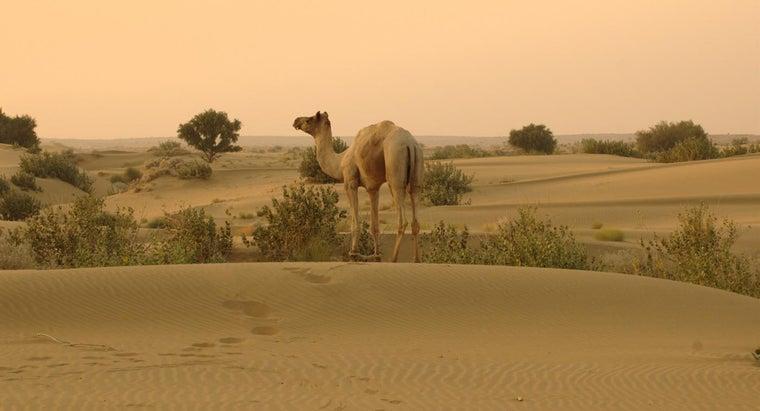 thar-desert-located