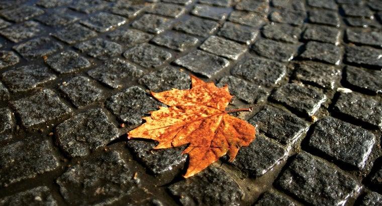 theme-last-leaf-o-henry