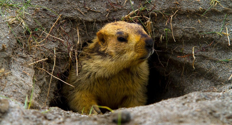 time-groundhog-come-out