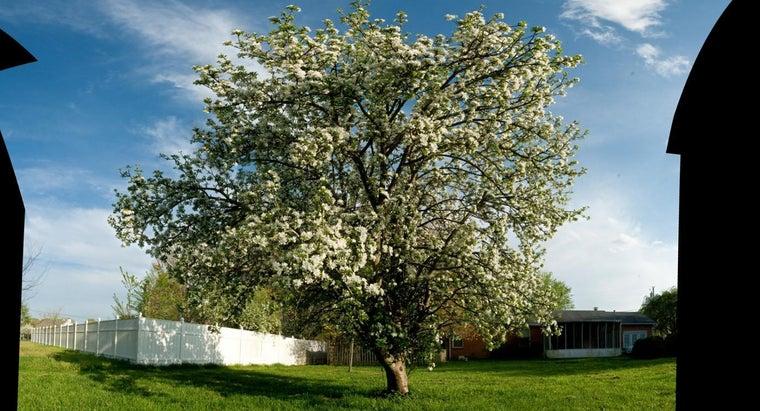 time-spray-apple-trees