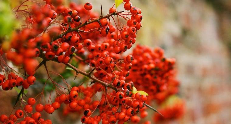 type-tree-red-berries