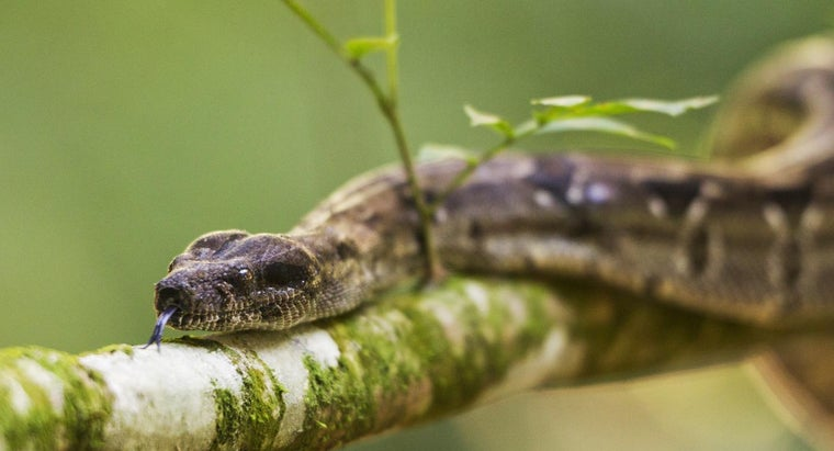 types-plants-repel-snakes