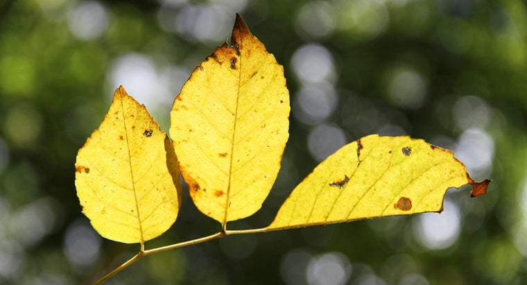 vegetable-leaves-turning-yellow