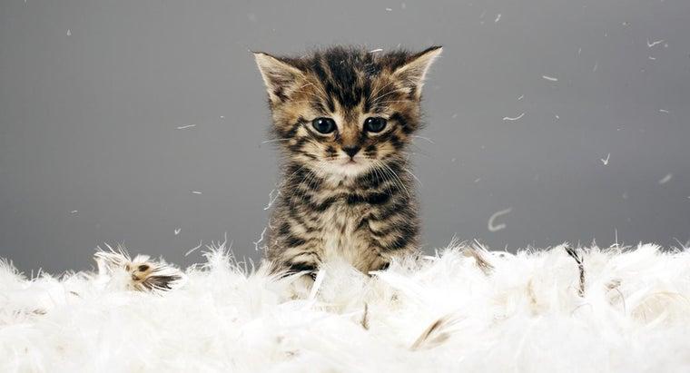 age-can-kitten-declawed