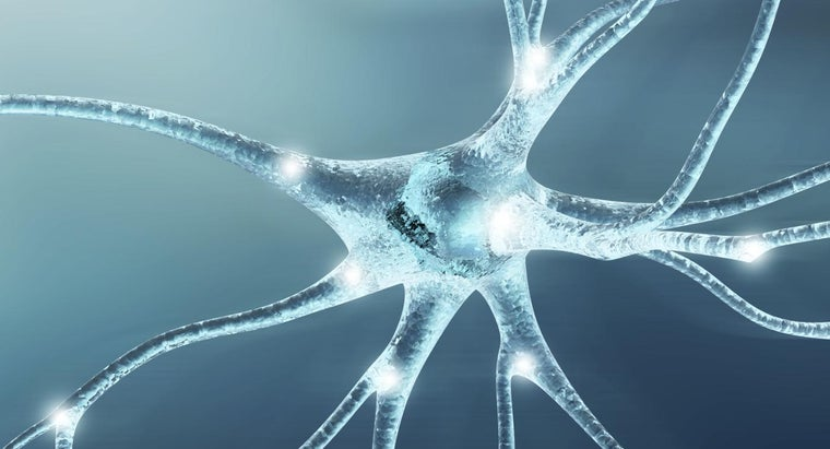 function-nerve-cells