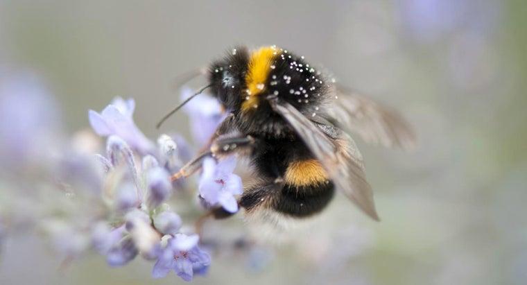 life-span-bumble-bee
