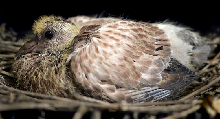 name-baby-pigeon