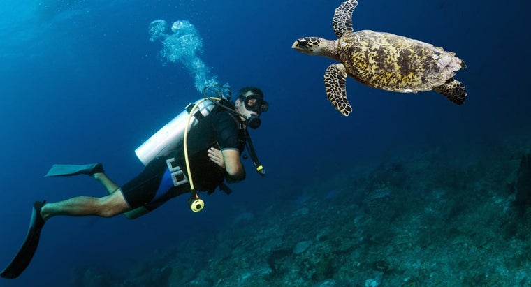 turtles-live