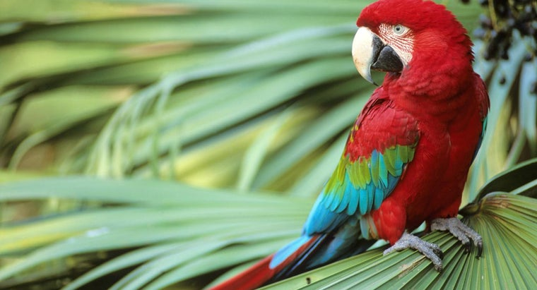 parrots-live