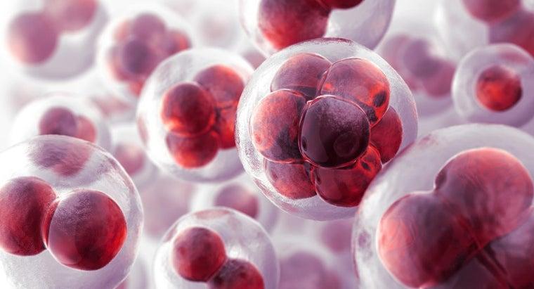 cells-called-basic-unit-life