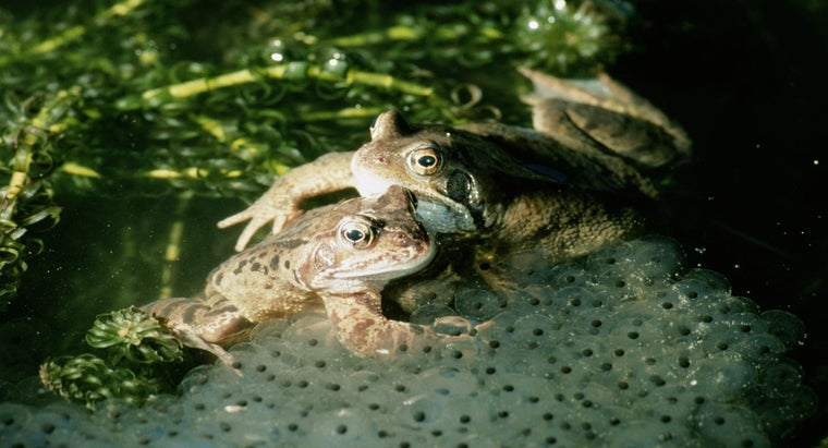 frogs-lay-eggs-water