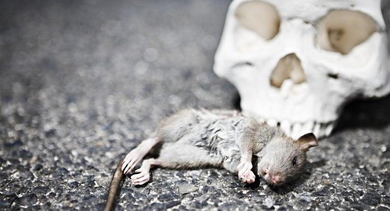 rigor-mortis-occur