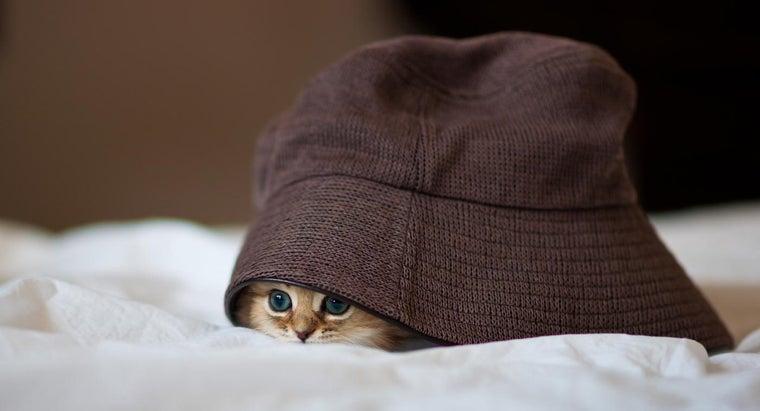 kitten-shake